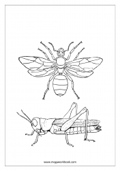 Insect Coloring Pages - Grasshopper, Fly