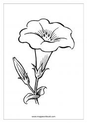 Coloring Sheet - Flower
