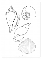 Sea Animals Coloring Pages - Sea Shells Coloring Pages