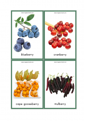 Fruits Flash Cards - Blueberry, Cranberry, Cape Gooseberry, Mulberry