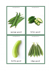 Vegetables Flash Cards - Sponge Gourd, Bottle Gourd, Bitter Gourd, Ridge Gourd