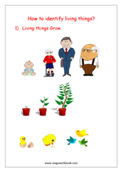 eBook-Living And Non-living Things