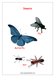eBook-Name of Insects(with pictures)