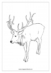 Stag/Deer Coloring Pages - Animal Coloring Pages