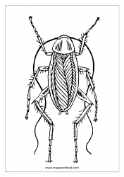 Insect Coloring Pages - Cockroach