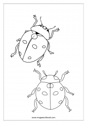 Insect Coloring Pages - Lady Bug