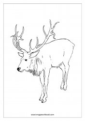 Christmas Coloring Pages - Free Printable Christmas Coloring Sheet - Reindeer