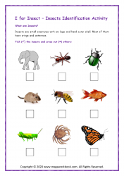 Insects Identification