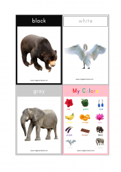 Color Flashcards - Black, White, Gray, Color Chart