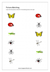 Picture Matching Worksheet - Insects Themed
